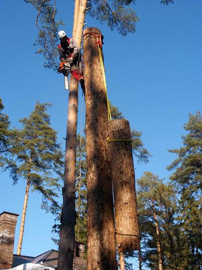 Удаление опасного дерева по частям