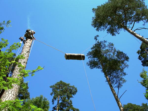 Сверхсложное удаление дерева