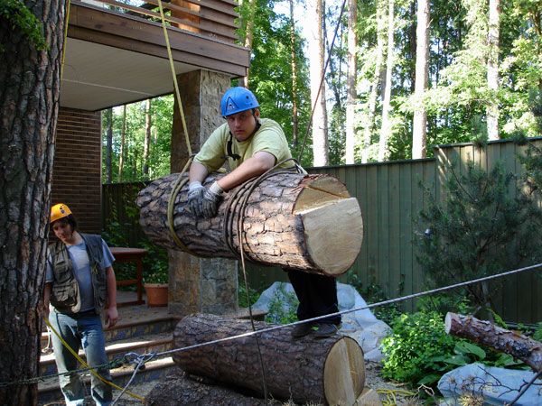 Удаление дерева с завешиванием частей на канате