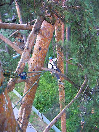 Страховка, временное закрепление аварийного дерева